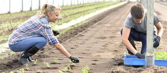 saisonniers-agricoles-lexoneration-de-cotisations-maintenue-pendant-2ans