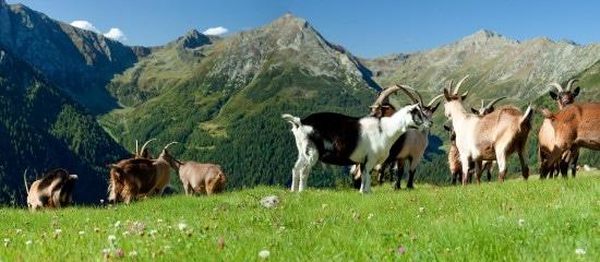 nouvelle-delimitation-des-zones-agricoles-defavorisees