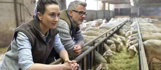 conjoint-travaillant-sur-l'exploitation-agricole:-declaration-obligatoire!