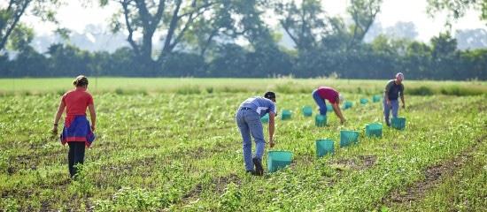 combien-y-a-t-il-d'associations-agricoles-employeuses?
