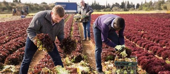 covid-19:-des-conseils-de-securite-pour-les-employeurs-agricoles