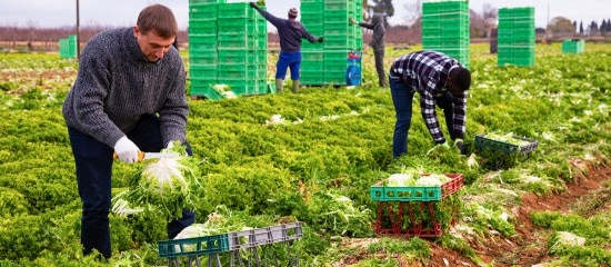 travailleurs-agricoles-etrangers:-un-retour-en-france-sous-conditions