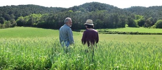 deces-d'un-exploitant-agricole-et-option-pour-une-assiette-forfaitaire-de-cotisations