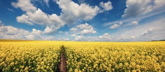 agriculteurs-:-les-aides-a-la-production-d'especes-riches-en-proteines-bientot-disponibles